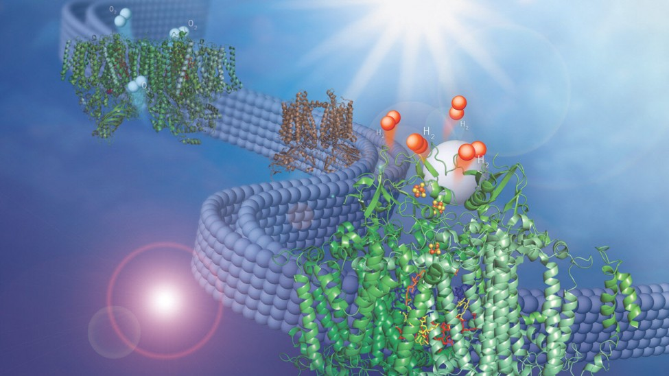 Argonne National Laboratory Scientists Discovery Adapts Natural Membrane to make Hydrogen Fuel from Water 3